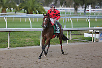 January 17, 2015:  String King ridden by James Graham wins the Col.E.R. Bradley Handicap at the New Orleans Fairgrounds course. Steve Dalmado/ESW/CSM