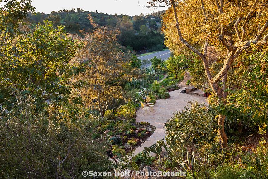 Debra Lee Baldwin backyard hillside patio garden framed by Engelmann Oak (Quercus engelmannii) tree in early morning light