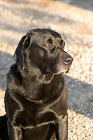 Chateau Mire l'Etang. La Clape. Languedoc. France. Europe. The Dog.