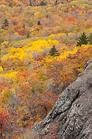 A forest of colors in Autumn, Brockway Summit, Michigan.