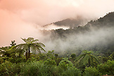 INDONESIA, Flores, the rainforest in the fog in Satar Mese