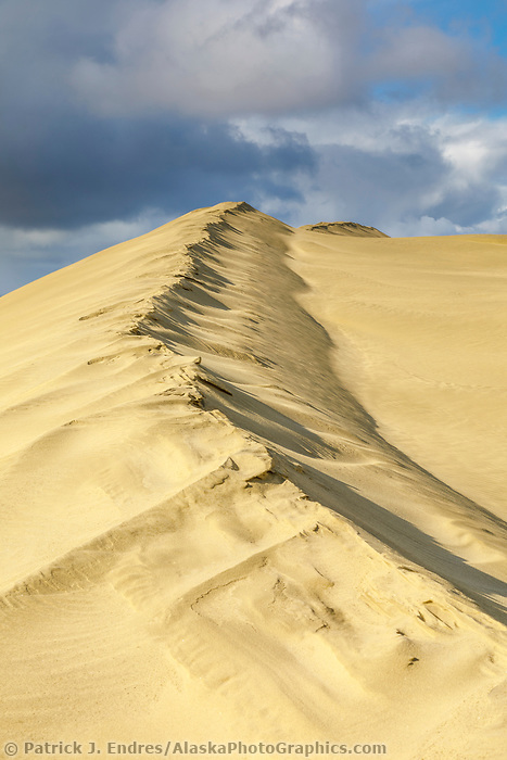 Sculpted ridge of sand in the Great Kobuk Sand Dunes in the Kobuk Valley National Park, Arctic, Alaska.