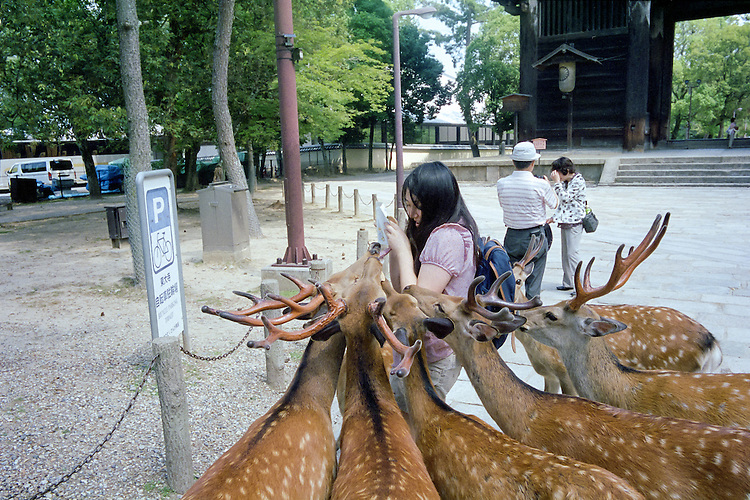 Hungry Deer in Nara Park - Nara