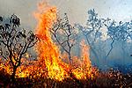 Incêndio em mata nativa em Brasília, Distrito Federal. 1993. Foto de Paula Simas.