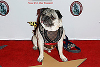 LOS ANGELES - FEB 29:  Doug the Pug at the Beverly Hills Dog Show Presented by Purina at the LA County Fairplex on February 29, 2020 in Pomona, CA
