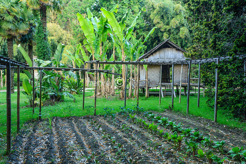 France, Gard, Générargues, LA BAMBOUSERAIE : le potager du village laotien.