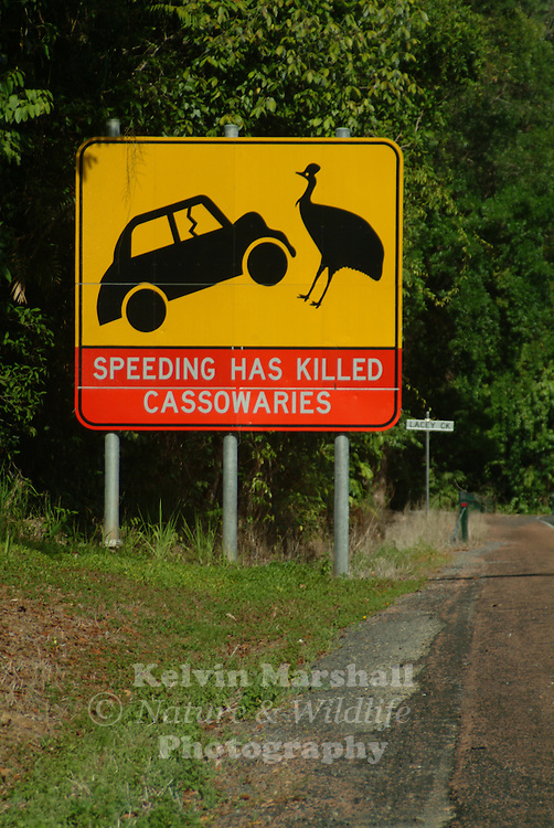 This large sign is located on the main road to Mission Beach, this Cassowary speeding sign stands out for all to see.