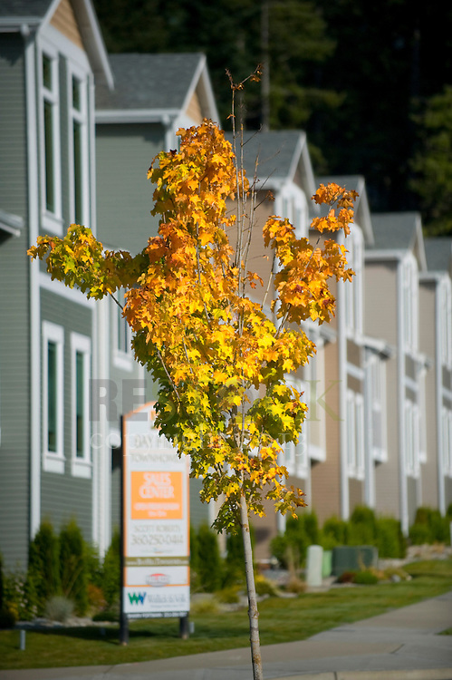 Condos in Autumn