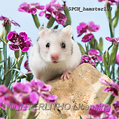 Xavier, ANIMALS, REALISTISCHE TIERE, ANIMALES REALISTICOS, photos+++++,SPCHHAMSTER198,#A#, EVERYDAY ,funny