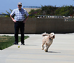A SheepDog chasing a ball thrown by his human-family on the walkway overlook of the Flowerfields, in Carlsbad, CA, on Wednesday, April 27, 2016. Photo by Jim Peppler. Copyright Jim Peppler  2016.