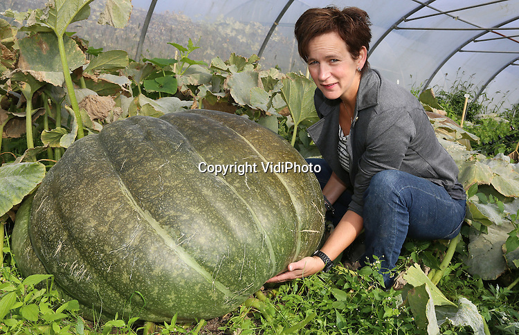 Foto: VidiPhoto<br /> <br /> SINT ODILI&Euml;NBERG - Petra Theunissen van tuinbouwbedrijf 't Akkertje in het Limburgse Sint Oldili&euml;nberg, toont donderdag haar pompoenen. Met de grootste daarvan doet ze dit weekend mee aan het eerste offici&euml;le Nederlandse kampioenschap Zwaarste Pompoen. Het fenomeen is overgewaaid vanuit de VS, waar de wedstrijden van de Great Pumpkin Commonwealth (GPC) razend populair is. Ook in Belgi&euml; trekt de wedstrijd tienduizenden bezoekers. Theunissen, oprichtster van de Dutch Pumpkin Confederation, onderdeel van de GPC, verwacht dat het NK Zwaarste Pompoen in de toekomst net zo populair wordt. Inmiddels hebben zich enkele tientallen kandidaten aangemeld. Het eerste offici&euml;le NK maakt deel uit van het pompoenenweekend, dat dit weekend op het terrein van 't Akkertje wordt gehouden. Voorlopig is niet de verwachting dat een Nederlander wereldkampioen wordt. Terwijl de grootste pompoenen in ons land tussen de 200 en 300 kilo wegen, zijn er in de VS exemplaren van rond de 800 kilo. Petra Theunissen kweekt zelf meer dan honderd soorten pompoenen.