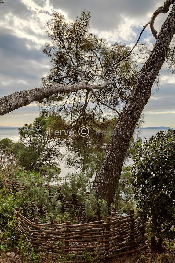 Domaine du Rayol en novembre : terrasse à proximité du Rayollet avec pins penchés.