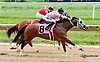 Classy Citizen winning at Delaware Park on 8/17/13