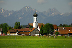 White onion shaped domed church and farm buildings with cows in the foreground. The mountains of the Bavarian alps in the background. Schwangau, Forggensee lake, Bavaria, Germany.