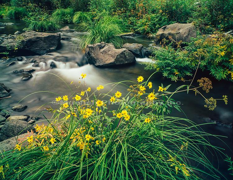 Wildflowers,Black River,White Mountains,Arizona