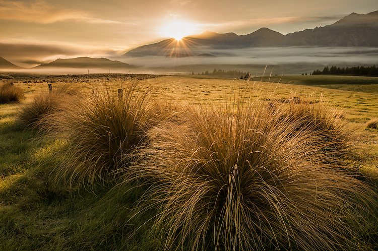 Photo of a golden sunrise over the Torlesse Range with tussock grasses in the foreground. Great Alpine Highway, Canterbury.