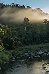 Mist over Wooroonooran forest