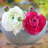 Gisela, FLOWERS, BLUMEN, FLORES, photos+++++,DTGK2535,#f#, EVERYDAY