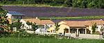 VMI Vincentian Heritage Tour: Lavender fields outside Lyon France Monday, June 27, 2016. (DePaul University/Jamie Moncrief)