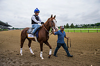 ELMONT, NY - JUNE 07: Free Drop Billy gets ready to gallop in preparation for the 150th Belmont Stakes at Belmont Park on June 07, 2018 in Elmont, New York. (Photo by Alex Evers/Eclipse Sportswire/Getty Images)