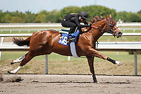 #116Fasig-Tipton Florida Sale,Under Tack Show. Palm Meadows Florida 03-23-2012 Arron Haggart/Eclipse Sportswire.