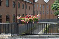 Summer flower display in Farnham, Surrey.