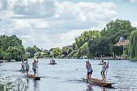 Maidenhead, United Kingdom.  &quot;Mixed Doubles&quot;, approaching the &quot;Finsh Line&quot;. &quot;Thames Punting Club Regatta&quot;, Bray Reach.<br />  Sunday  06/08/2017<br /> <br /> [Mandatory Credit. Peter SPURRIER Intersport Images}.<br /> <br /> LEICA Q (Typ 116) 28mm  f1.7   1/5000 /sec    100 ISO River Thames, .......... Summer, Sport, Sunny, Bright, Blue Skies, Skilful,