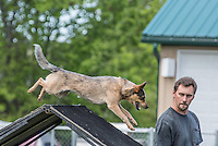 NADAC Up and Over Agility Trial Boomtowne May 22 to 24 2015