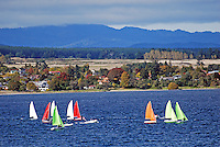 Yachts, sailing boats, Lake Taupo, New Zealand, with Taupo, the township, in the background. 20104145423..Copyright Image from Victor Patterson, 54 Dorchester Park, Belfast, United Kingdom, UK. Tel: +44 28 90661296. Email: victorpatterson@me.com; Back-up: victorpatterson@gmail.com..For my Terms and Conditions of Use go to www.victorpatterson.com and click on the appropriate tab.