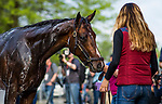 LOUISVILLE, KY - MAY 02: Bolt d'Oro at Churchill Downs on May 2, 2018 in Louisville, Kentucky. (Photo by Alex Evers/Eclipse Sportswire/Getty Images)