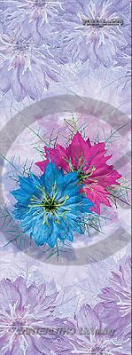 Jacek, FLOWERS, portrait, macro, photos, PLSE, PLSEbak28,#F# Blumen, flores, retrato