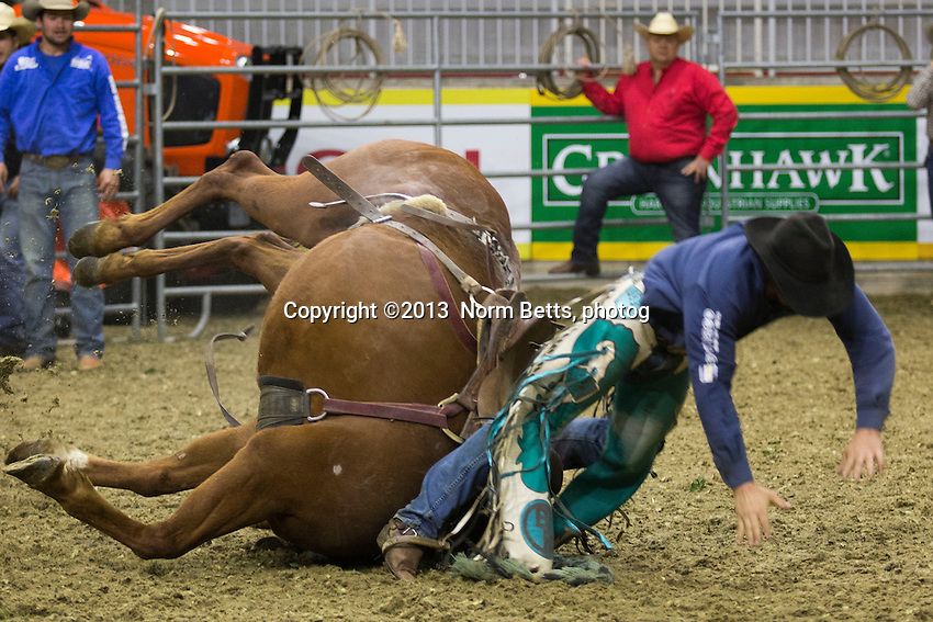 The Royal Rodeo at the Royal Agricultural Winter Fair, Toronto, Ontario, Canada<br /> November 3, 2013<br /> Norm Betts, photographer<br /> 416 460 8743<br /> normbetts@canadianphotographer.com<br /> &copy;2013, normbetts, photographer