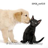 Xavier, ANIMALS, REALISTISCHE TIERE, ANIMALES REALISTICOS, FONDLESS, photos+++++,SPCHWS610,#A#