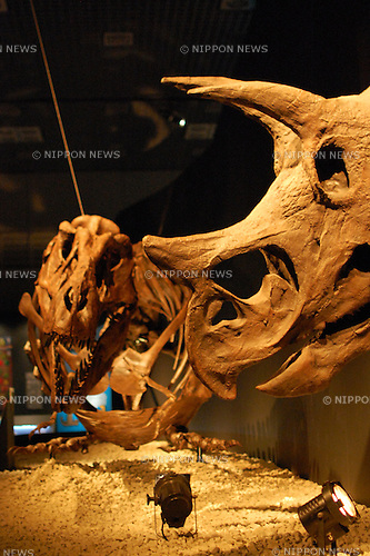 July 1st, 2011, The Dinosaur Expo 2011 is held at the National Science Museum in Ueno, Japan. The main attractions of the event are showpieces of Tyrannosaurus rex and triceratops fossils, which are facing each other as if they are fighting. The exhibition will be held from July 2 to October 2, 2011.