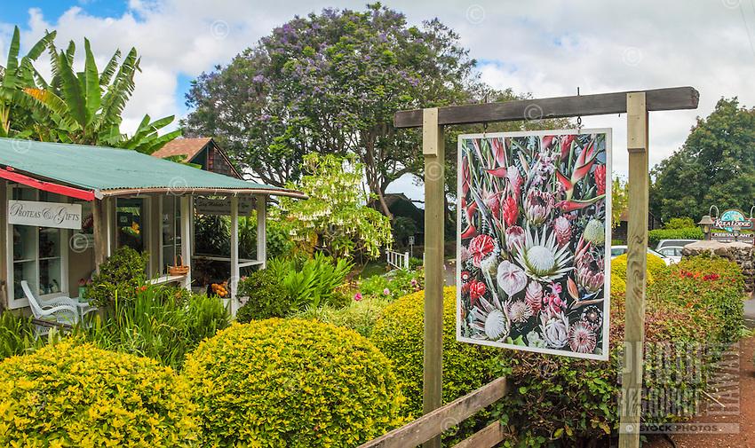 The Proteas of Hawaii flower gift shop by the Kula Lodge on Maui.