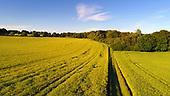 Arable Crops at Andover Down, Test Way, Hampshire