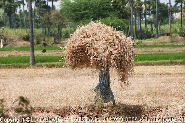 fields, india, straw,hay, on head, balance, hard job, hard worker,