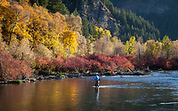 Fly Fisherman, Provo River, Autumn Fall Colors, Utah, UT, USA.