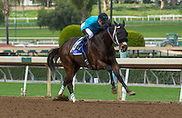 ARCADIA, CA  FEBRUARY 4: #3 St. Joe Bay, ridden by Kent Desormeaux, all alone in the stretch of the Palos Verdes Stakes (Grade ll) at Santa Anita Park, on February 4, 2017 in Arcadia, Ca.  (Photo by Casey Phillips/Eclipse Sportswire/Getty Images)