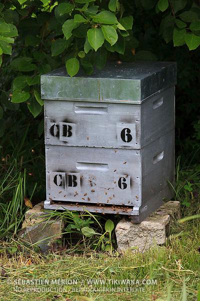 Ruche de Christelle Appaganou, apicultrice à Bourail