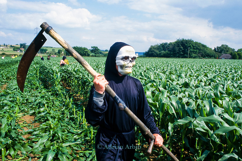 A demonstrator dressed as the GM Grim Reaper cuts through a field of GM test maize  at an  Anti GM  protest in Bridport,  Dorset