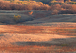 native prairie in autumn, Anderson Prairie State Preserve, Emmet County, Iowa