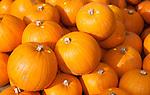 Luton Hoo The Walled Garden  Pumpkin Festival  13 October 2012