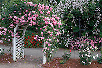 Rose arbor with Lavender Lassie. Heirloom Gardens, Oregon