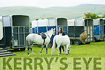 At the KERRY PONY SOCIETY 37th Annual Show & Gymkhana At Blennerville on Sunday