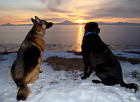 Ginger and Rasty Boy enjoy a beautiful sunset over Mount Redoubt from the bluffs of Kenai, Alaska.