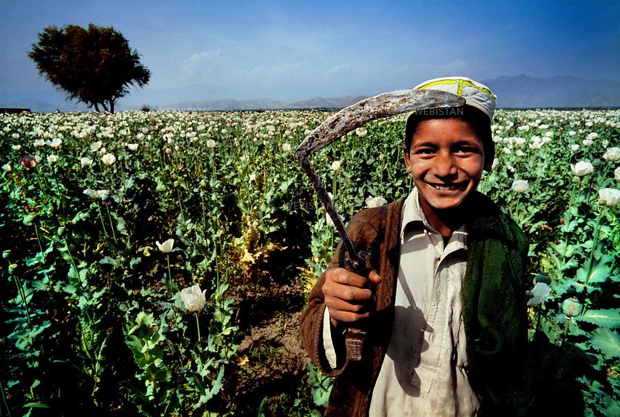 2004. An Afghan boy shows a tool used to collect opium in front of a poppy field. Un garçon afghan montre un outil utilisé pour récolter l'opium devant un champ de pavots.