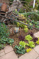 Growing Vegetables in Suburbia