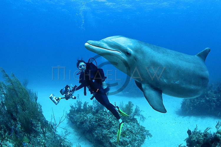 Common Bottle nose, Atlantic Bottlenose Dolphin (Tursiops truncatus). Bahamas