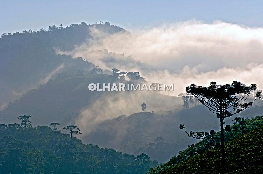 Amanhecer com névoa em Visconde de Mauá. Rio de Janeiro. 2007. Foto de João Caldas.